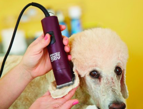 Wat is de Beste Hondentondeuse?