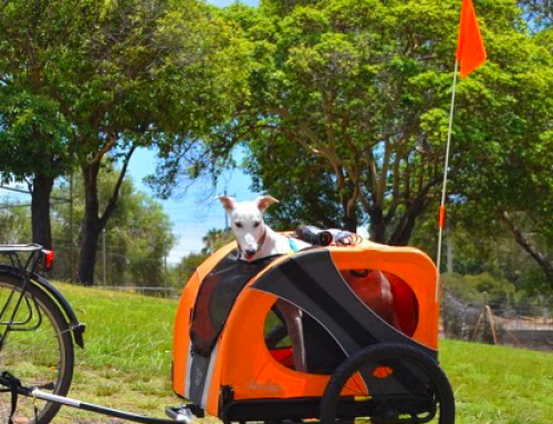 Makkelijk je hond meenemen op de fiets, in een Hondenfietskar
