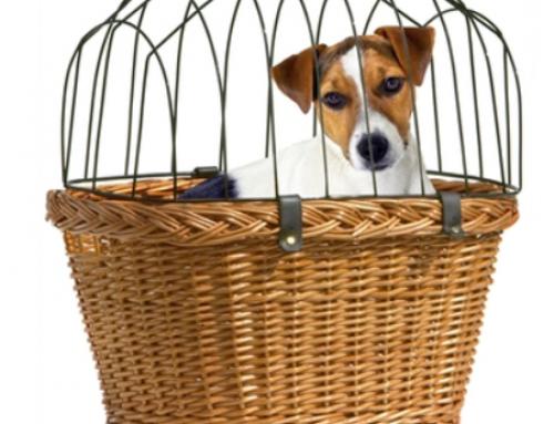 De Leukste en Voordeligste Hondenmanden voor op de Fiets – Hondenfietsmand