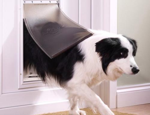 Hondenluik Met en Zonder Chip Voor Grote Hond en Kleine Honden