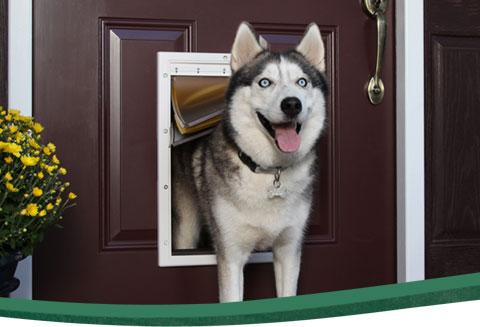 hondenluik in deur