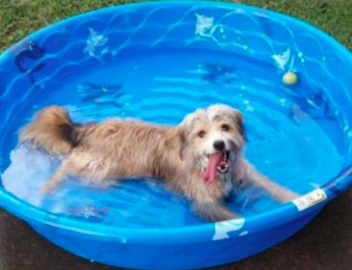 Wat is de Beste Hondenzwembad om te Kopen?